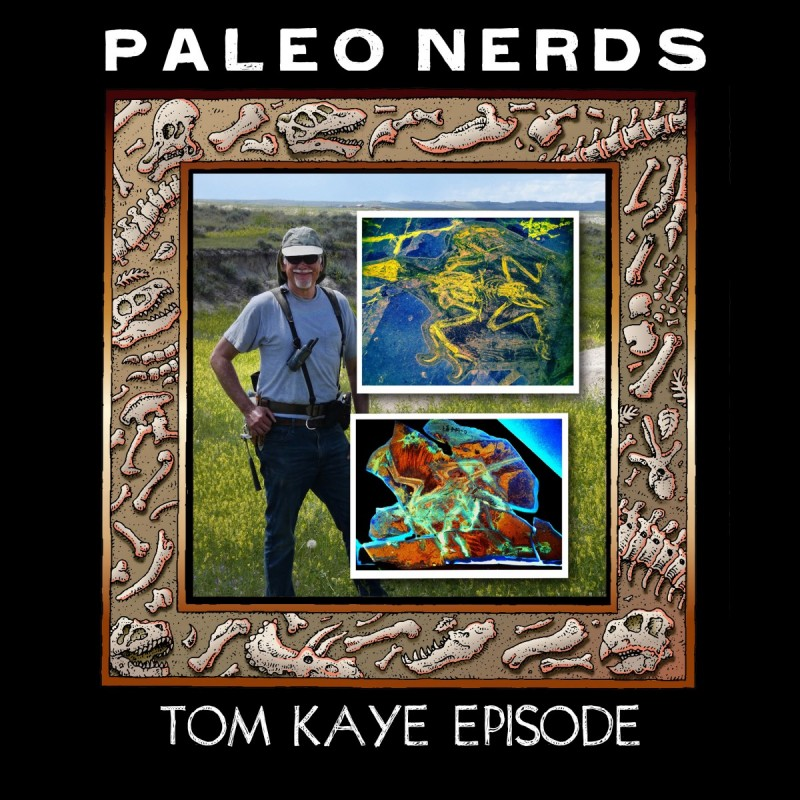 Episode #7: Using Lasers to Stare Into the Eyes of a Pterosaur  with Tom Kaye
