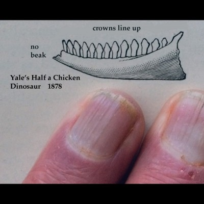 The type drawing for Nanotyrannus with Bob's fingers for scale.