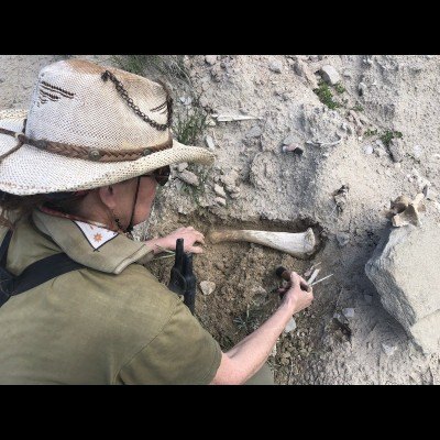 Carol Kaye uncovering a bison bone near their property in Wyoming.