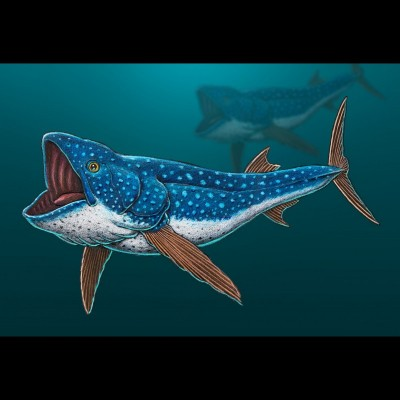 Ray's drawing of Bonnerichthys, a large filter feeding fish that cruised the Cretaceous seas of the Western Interior Seaway. Matt Friedman named it in honor of the Bonner family and their long history of fossil hunting.